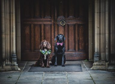 Dog Wedding photos