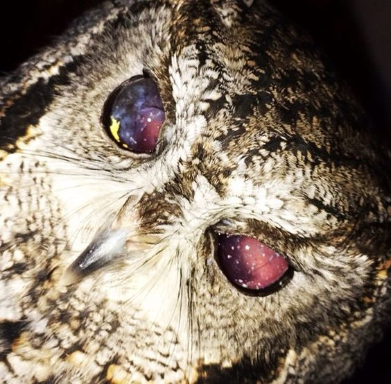 Zeus- The Owl With Galaxy Eyes'