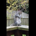 squirrel doing Kapalbhati