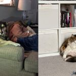 pets sitting like humans
